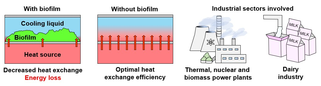 Biofilm impact on heat exchange efficiency and plant production