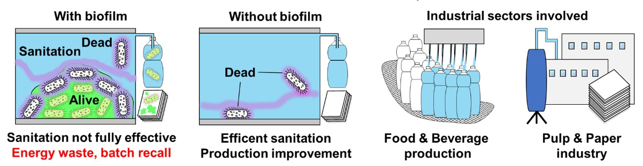 Biofilm impact on sanitation efficiency and energy consumption in different production plants