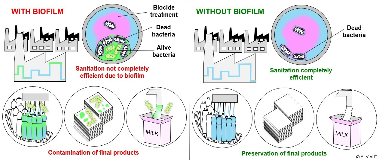 Issues related to biofilm increased resistance toward antimicrobial treatments