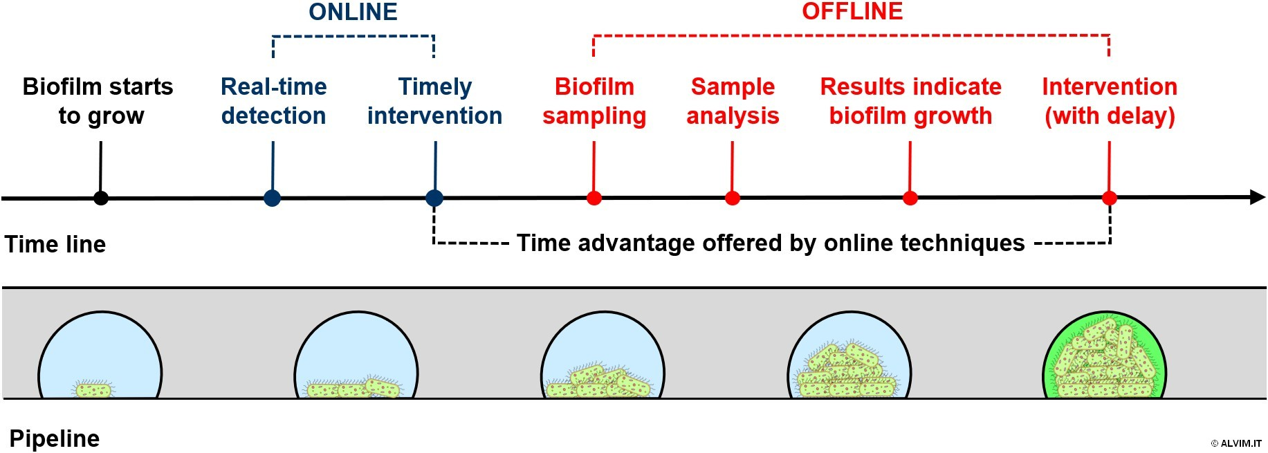 ONLINE VS OFFLINE techniques for biofilm monitoring