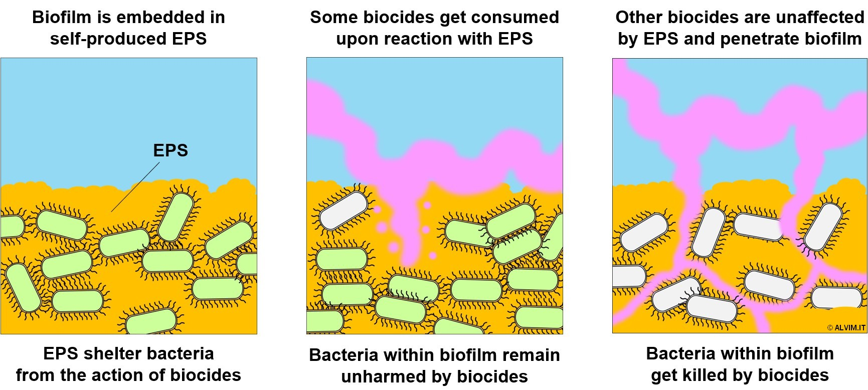 The biocide ability to penetrate biofilm is inversely proportional to its reactivity toward EPS